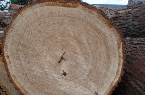 Massief hout